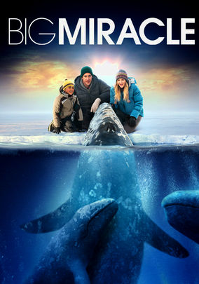 Rent Big Miracle on DVD